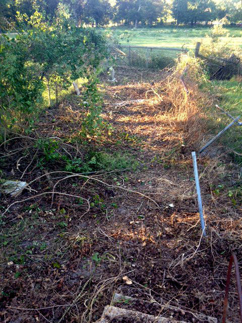 Underbrush In Owen Park Is So Dense Its >> Richard Williams Cemetery Aka Carroll Cemetery Montgomery County Texas